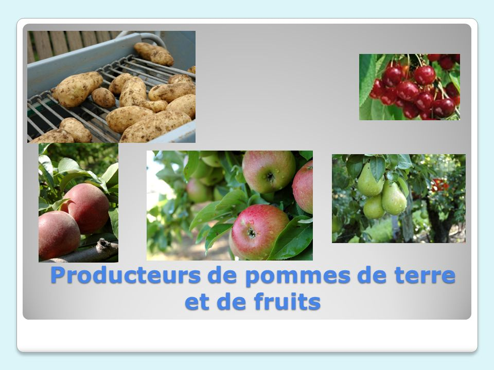 Producteurs de pommes de terre et de fruits