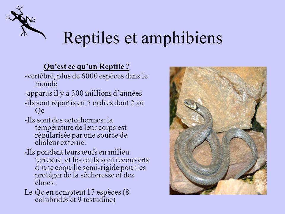 8 espèces au Québec