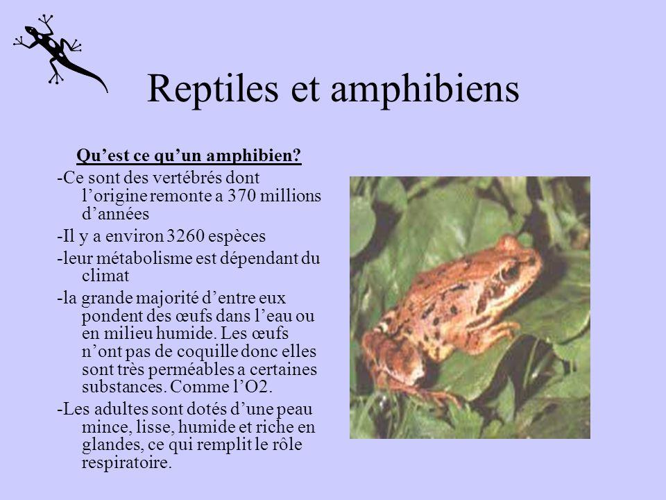 Reptiles et amphibiens Quest ce quun amphibien.