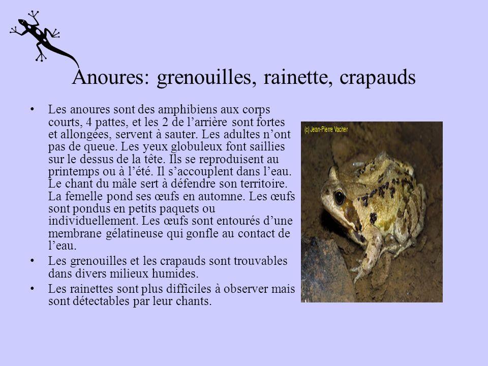 11 espèces au Québec