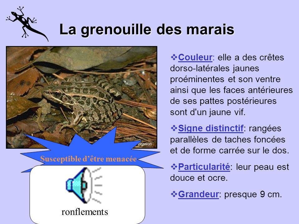 La grenouille des bois Couleur: rougeâtre, ocre ou brun foncé avec un masque foncé qui se termine derrière la cavité tympanique. Signe distinctif: par