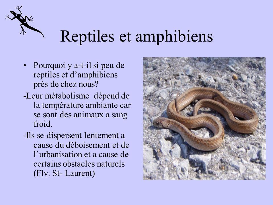 Reptiles et amphibiens Pourquoi y a-t-il si peu de reptiles et damphibiens près de chez nous.