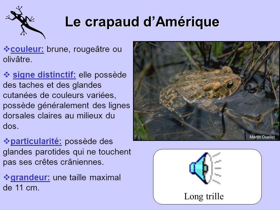 La grenouille du Nord Couleur: du vert olive au brun. Signes distinctif: marbrures foncées sur les flancs et les pattes postérieures. Son ventre est j