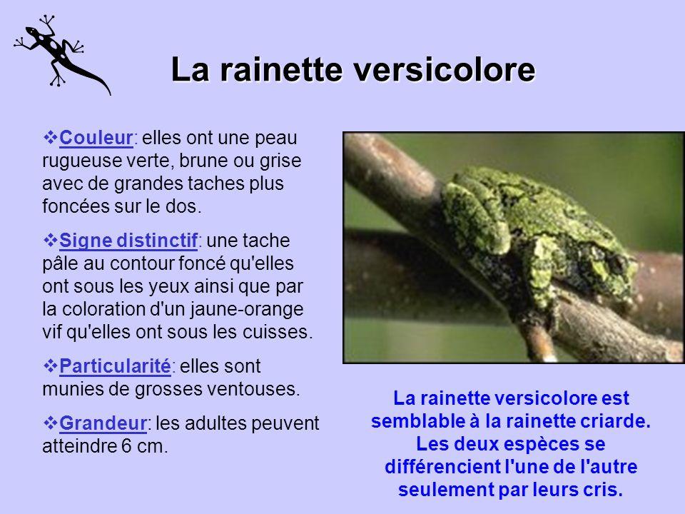 La situation de la rainette faux-grillon de lOuest Lhomme a beaucoup à voir avec la vulnérabilité de la rainette faux-grillon de lOuest dont les effec