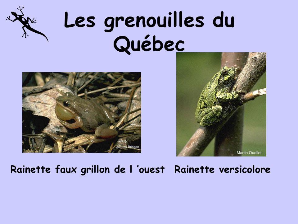 Les grenouilles du Québec Rainette crucifèreCrapaud dAmérique