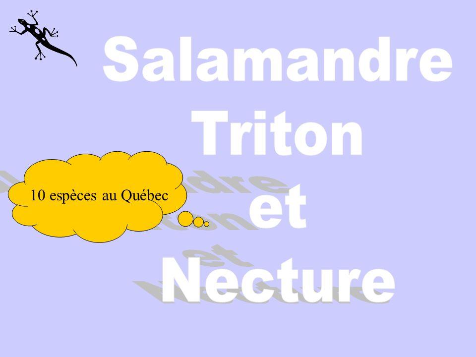 10 espèces au Québec