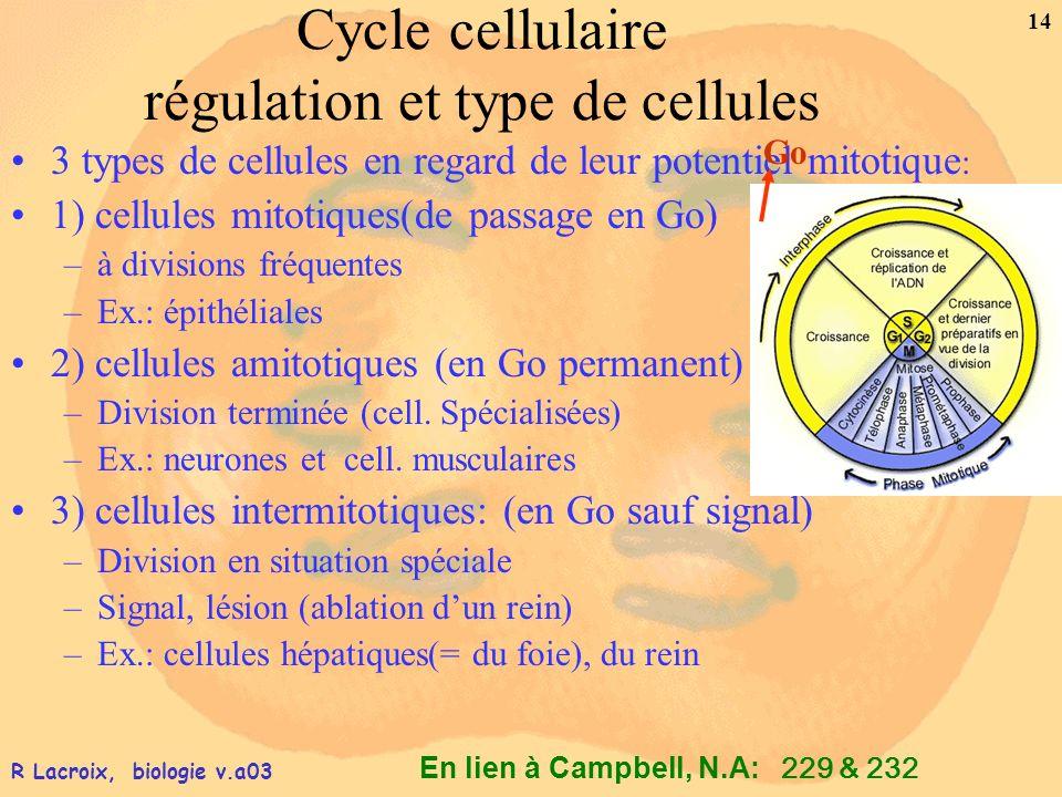En lien à Campbell, N.A: 14 R Lacroix, biologie v.a03 Cycle cellulaire régulation et type de cellules 3 types de cellules en regard de leur potentiel