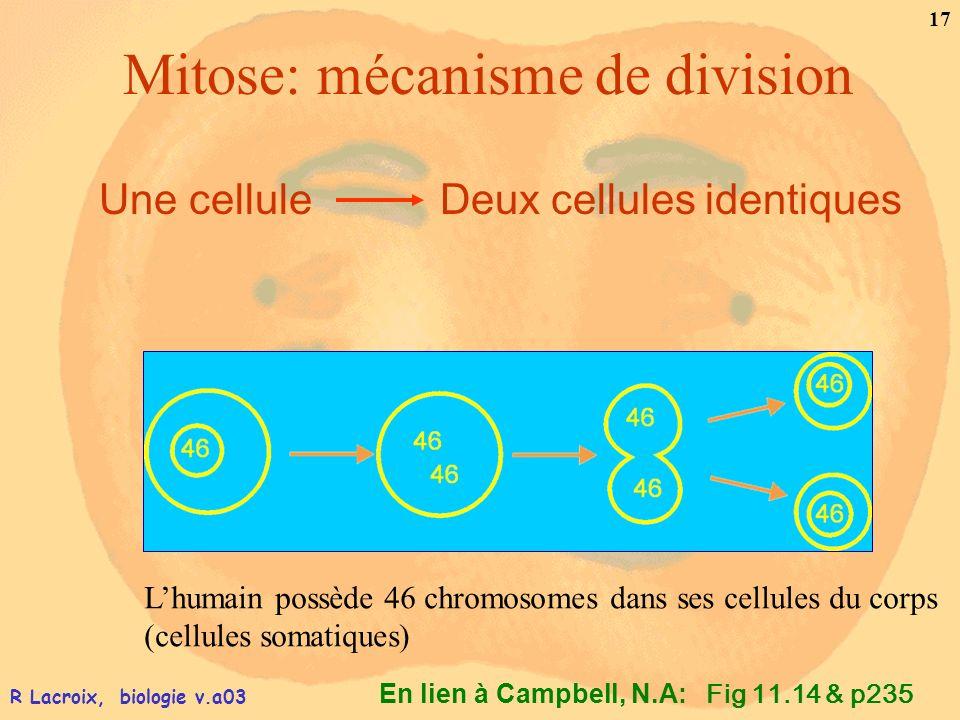 En lien à Campbell, N.A: 17 R Lacroix, biologie v.a03 Mitose: mécanisme de division Une cellule Deux cellules identiques Fig 11.14 & p235 Lhumain poss