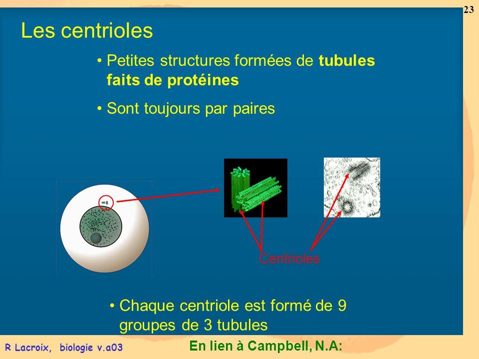 En lien à Campbell, N.A: 23 R Lacroix, biologie v.a03 Petites structures formées de tubules faits de protéines Sont toujours par paires Chaque centrio