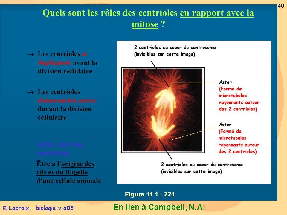 En lien à Campbell, N.A: 40 R Lacroix, biologie v.a03 Figure 11.1 : 221 Les centrioles se dupliquent avant la division cellulaire Les centrioles élabo