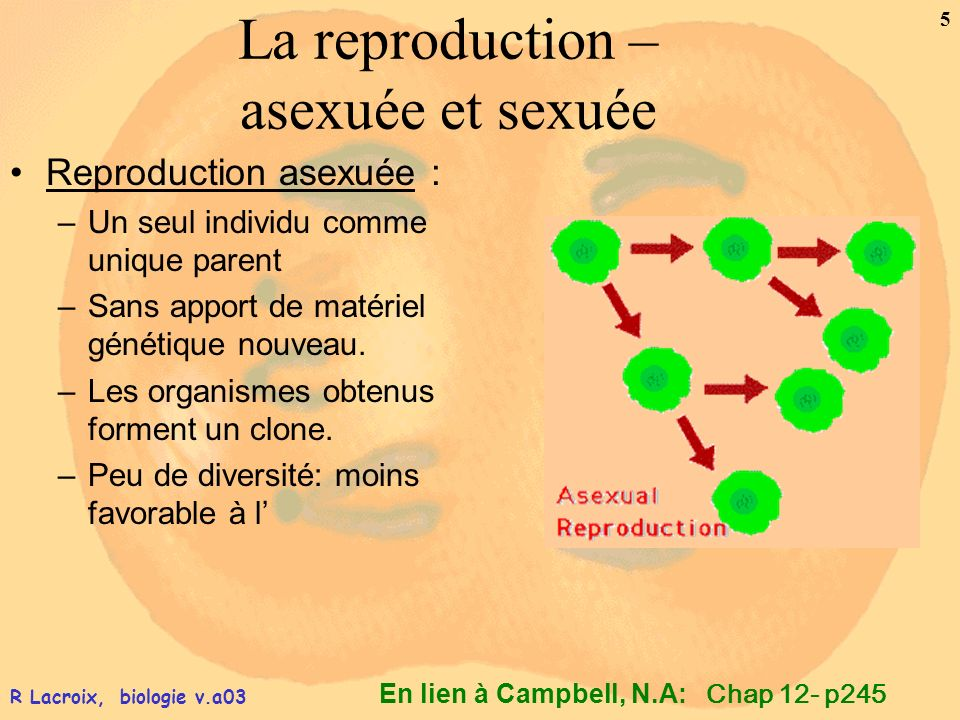 En lien à Campbell, N.A: 5 R Lacroix, biologie v.a03 La reproduction – asexuée et sexuée Reproduction asexuée : –Un seul individu comme unique parent
