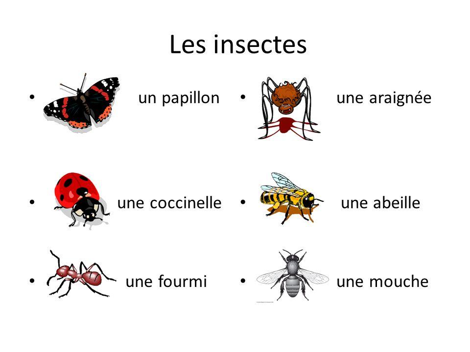 Les insectes une araignée une abeille une mouche un papillon une coccinelle une fourmi