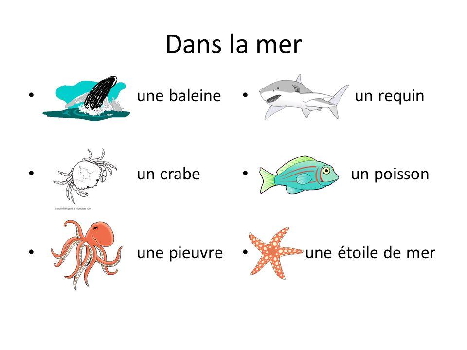 Dans la mer une baleine un crabe une pieuvre un requin un poisson une étoile de mer