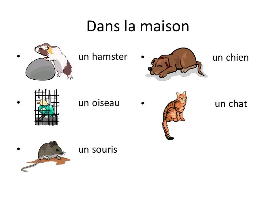 Dans la maison un hamster un oiseau un souris un chien un chat