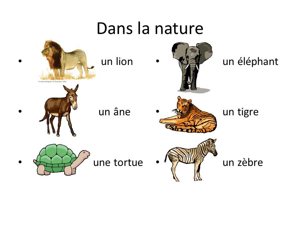 Dans la nature un lion un âne une tortue un éléphant un tigre un zèbre