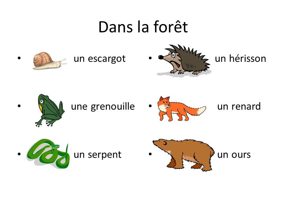 Dans la forêt un escargot une grenouille un serpent un hérisson un renard un ours