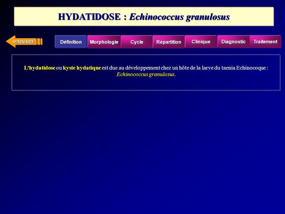 SOMMAIRE Lhydatidosekyste hydatique Echinococcus granulosus Lhydatidose ou kyste hydatique est due au développement chez un hôte de la larve du taenia