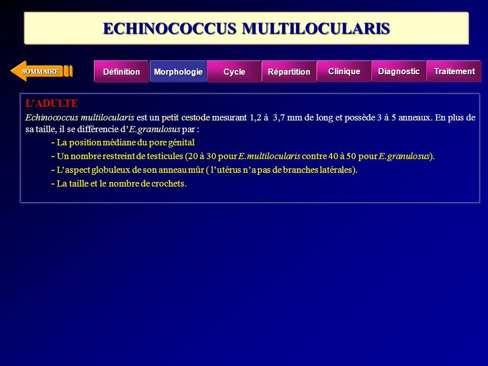 SOMMAIRE LADULTE Echinococcus multilocularispetit cestode dE.granulosus Echinococcus multilocularis est un petit cestode mesurant 1,2 à 3,7 mm de long