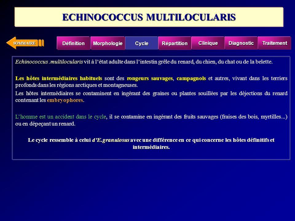 SOMMAIRE Echinococcus.multilocularis Echinococcus.multilocularis vit à létat adulte dans lintestin grêle du renard, du chien, du chat ou de la belette