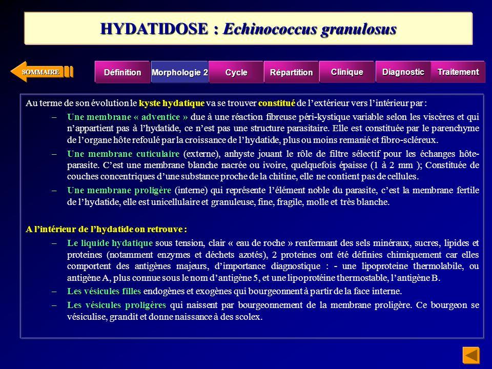 SOMMAIRE kyste hydatiqueconstitué Au terme de son évolution le kyste hydatique va se trouver constitué de lextérieur vers lintérieur par : –Une membra