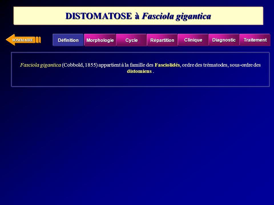 SOMMAIRE Fasciola giganticaFasciolidés distomiens Fasciola gigantica (Cobbold, 1855) appartient à la famille des Fasciolidés, ordre des trématodes, so