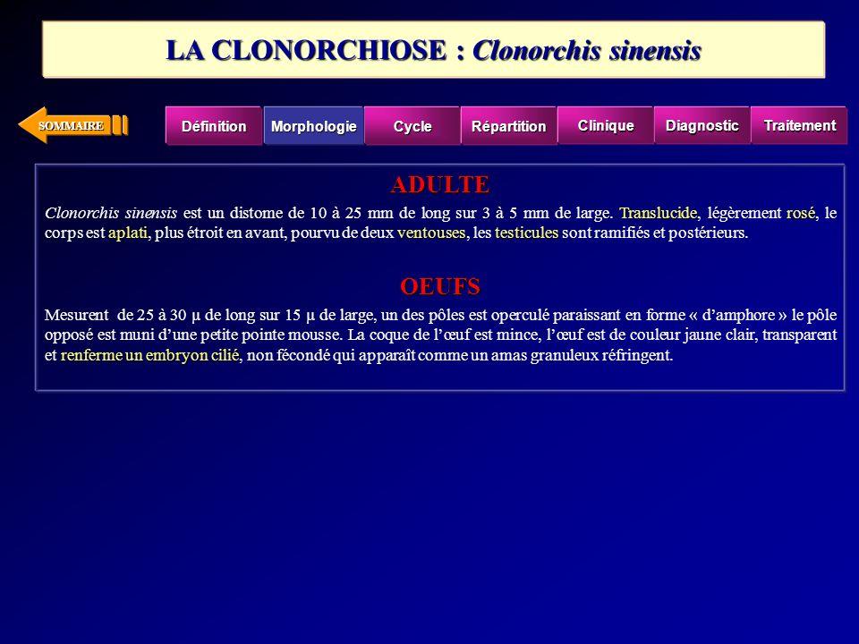 SOMMAIRE ADULTE Transluciderosé aplativentousestesticules Clonorchis sinensis est un distome de 10 à 25 mm de long sur 3 à 5 mm de large.