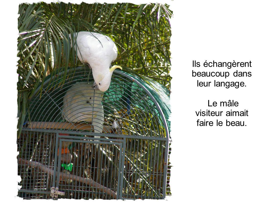 Ils échangèrent beaucoup dans leur langage. Le mâle visiteur aimait faire le beau.