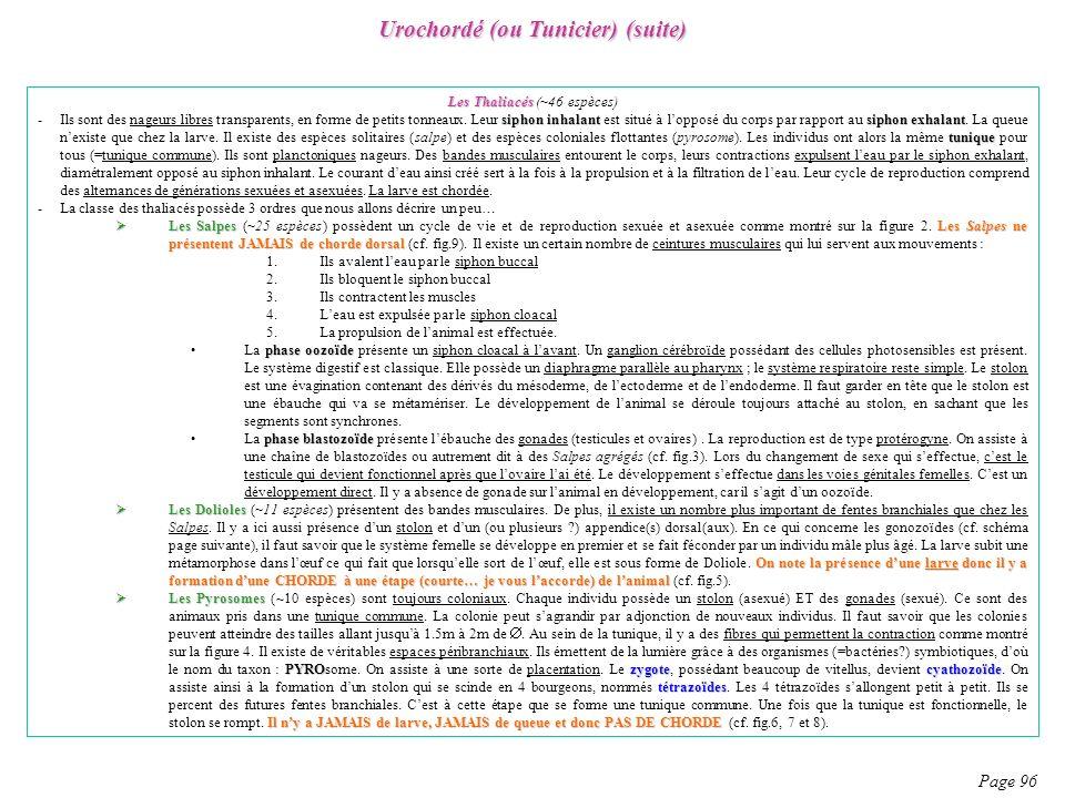 Urochordé (ou Tunicier) (suite) Page 96 Les Thaliacés Les Thaliacés (~46 espèces) siphon inhalantsiphon exhalant tunique -Ils sont des nageurs libres