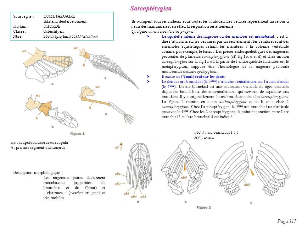 Description morphologique : -Les nageoires paires deviennent monobasales (apparition de lhumérus et du fémur) et « charnues » (=sarkos en grec) et trè