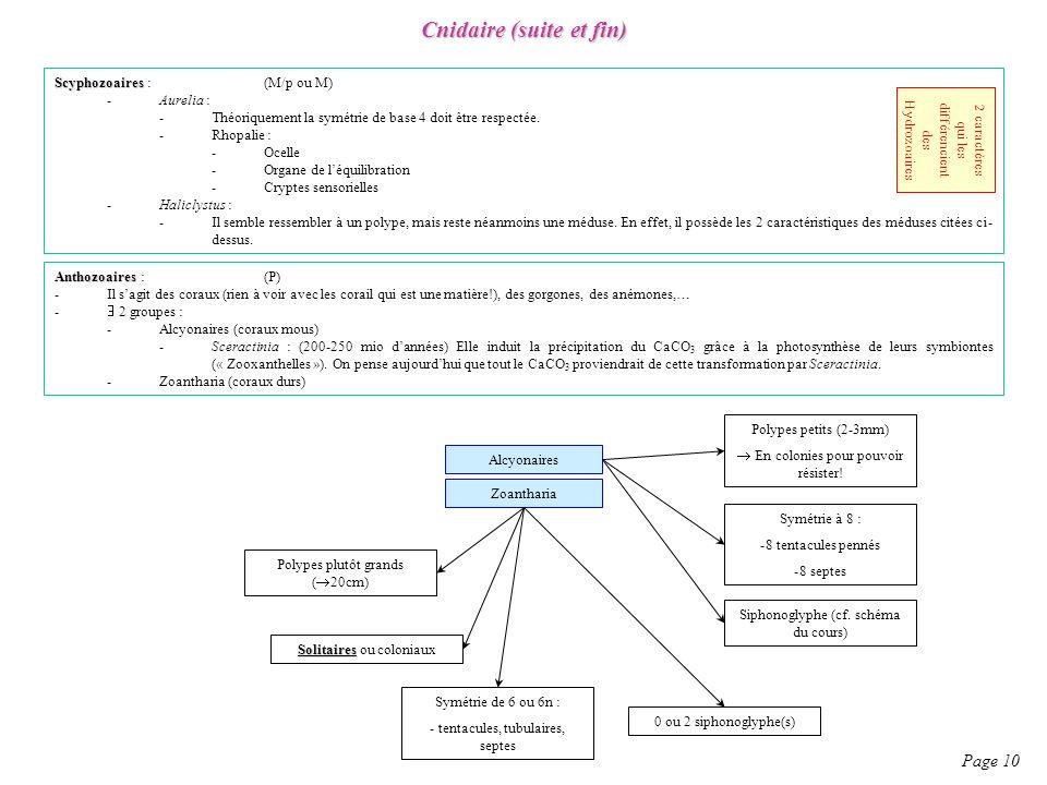 Scyphozoaires Scyphozoaires : (M/p ou M) -Aurelia : -Théoriquement la symétrie de base 4 doit être respectée. -Rhopalie : -Ocelle -Organe de léquilibr