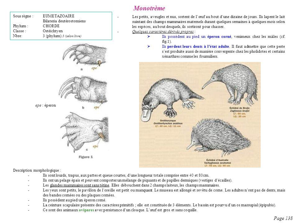 Description morphologique : -Ils sont lourds, trapus, aux pattes et queue courtes, dune longueur totale comprise entre 40 et 80cm. -Ils ont un pelage