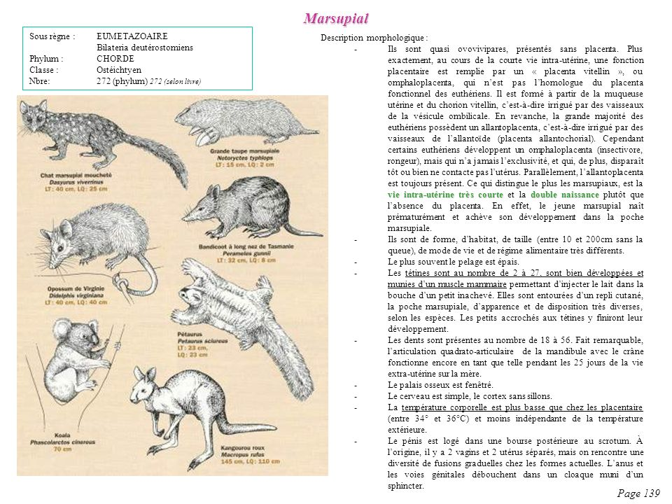 Description morphologique : vie intra-utérine très courtedouble naissance -Ils sont quasi ovovivipares, présentés sans placenta. Plus exactement, au c