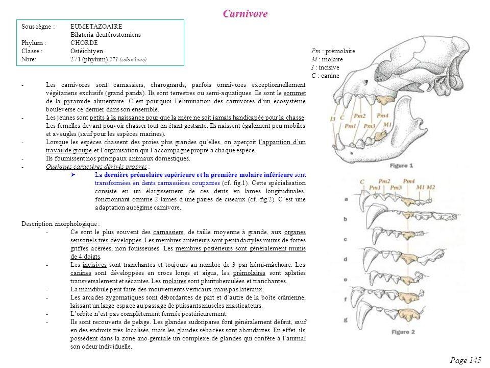 Description morphologique : -Ce sont le plus souvent des carnassiers, de taille moyenne à grande, aux organes sensoriels très développés. Les membres