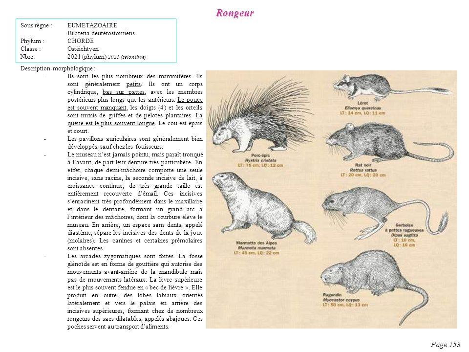 Description morphologique : -Ils sont les plus nombreux des mammifères. Ils sont généralement petits. Ils ont un corps cylindrique, bas sur pattes, av