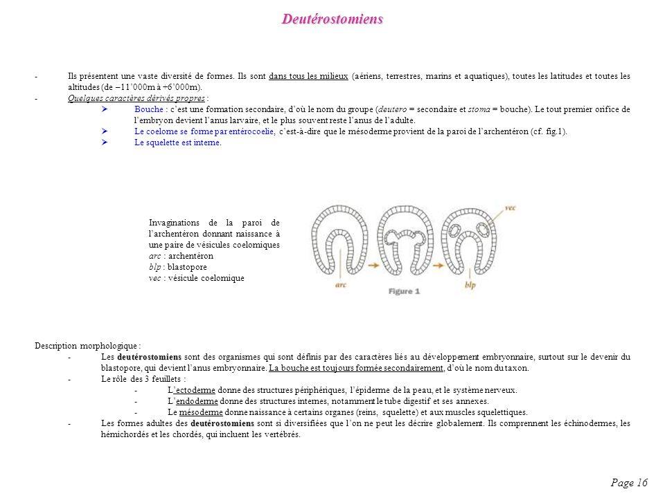 Page 16 Deutérostomiens -Ils présentent une vaste diversité de formes. Ils sont dans tous les milieux (aériens, terrestres, marins et aquatiques), tou