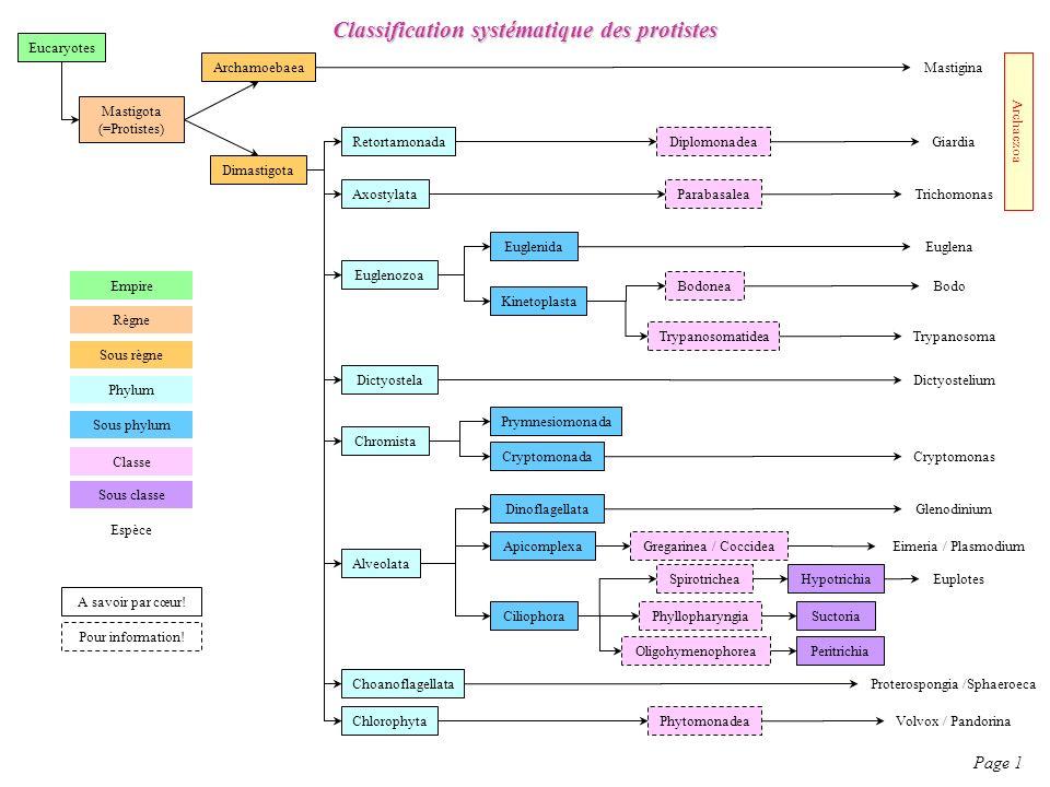 Classification systématique des protistes Page 1 Eucaryotes Mastigota (=Protistes) Archamoebaea Mastigina Dimastigota Retortamonada Giardia Diplomonad