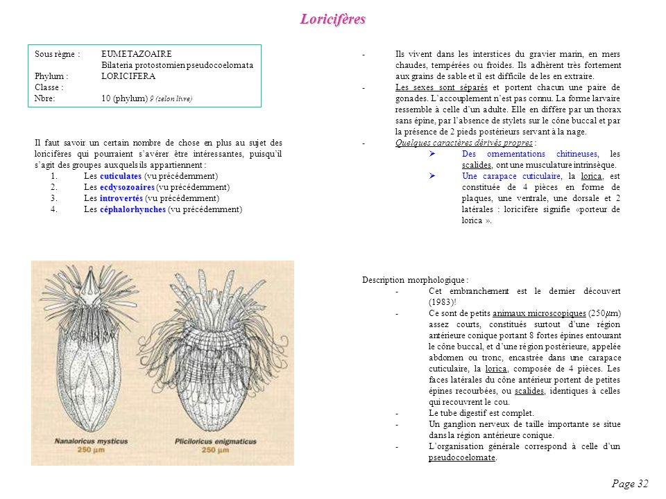 Description morphologique : -Cet embranchement est le dernier découvert (1983)! -Ce sont de petits animaux microscopiques (250 m) assez courts, consti