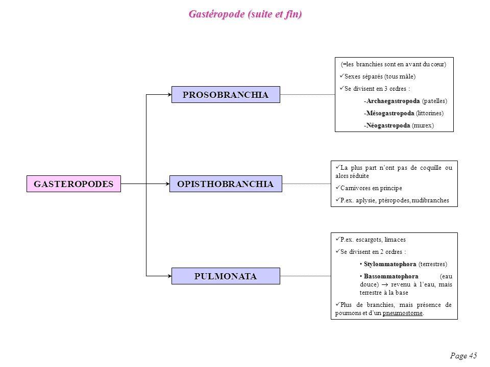 Gastéropode (suite et fin) Page 45 GASTEROPODES PROSOBRANCHIA OPISTHOBRANCHIA PULMONATA (=les branchies sont en avant du cœur) Sexes séparés (tous mâl