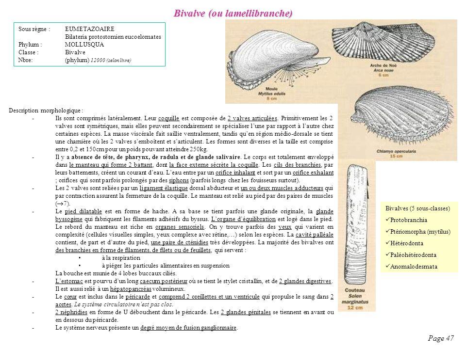 Description morphologique : -Ils sont comprimés latéralement. Leur coquille est composée de 2 valves articulées. Primitivement les 2 valves sont symét