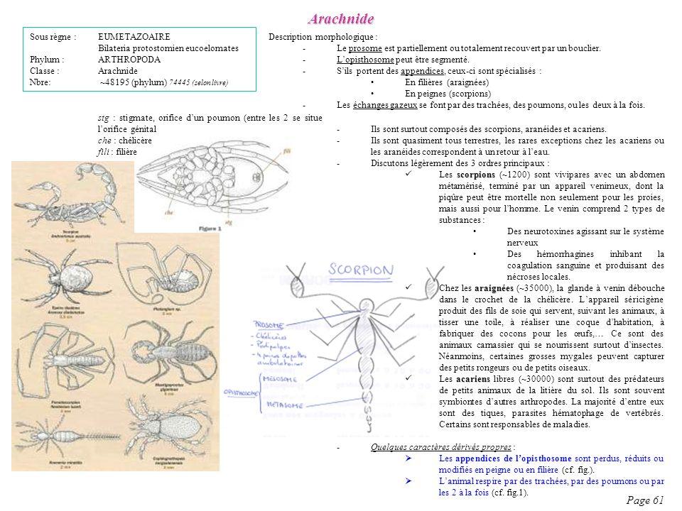 Description morphologique : -Le prosome est partiellement ou totalement recouvert par un bouclier. -Lopisthosome peut être segmenté. -Sils portent des