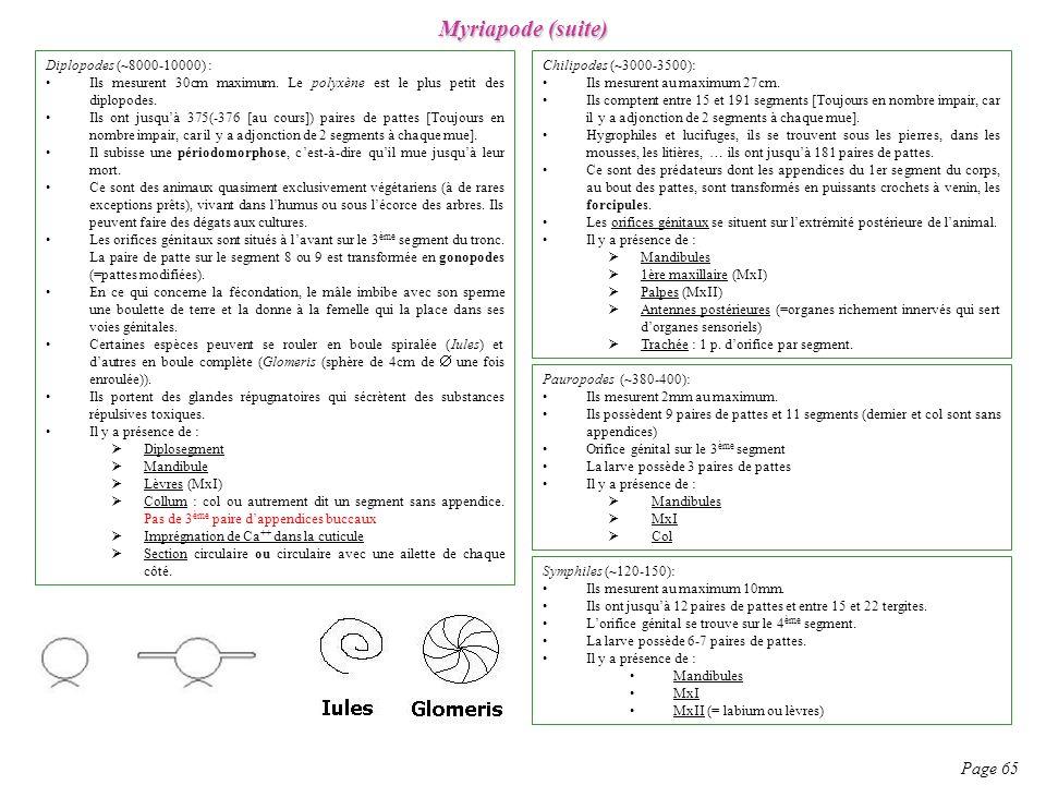 Myriapode (suite) Page 65 Diplopodes (~8000-10000) : Ils mesurent 30cm maximum. Le polyxène est le plus petit des diplopodes. Ils ont jusquà 375(-376