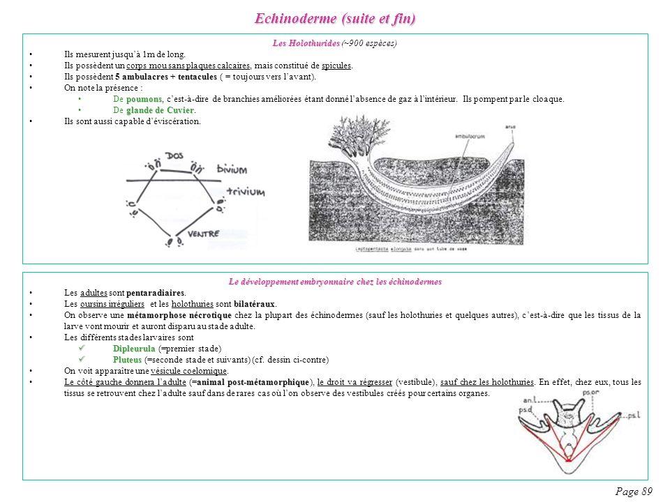 Echinoderme (suite et fin) Page 89 Les Holothurides Les Holothurides (~900 espèces) Ils mesurent jusquà 1m de long. Ils possèdent un corps mou sans pl