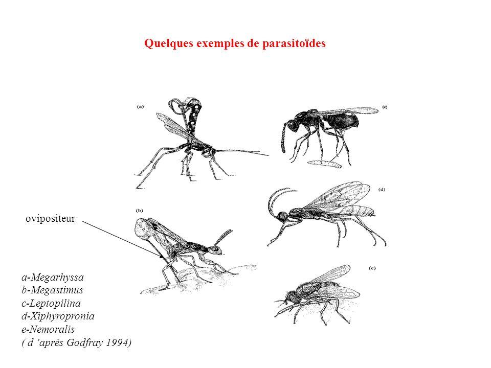 a-Megarhyssa b-Megastimus c-Leptopilina d-Xiphyropronia e-Nemoralis ( d après Godfray 1994) ovipositeur Quelques exemples de parasitoïdes