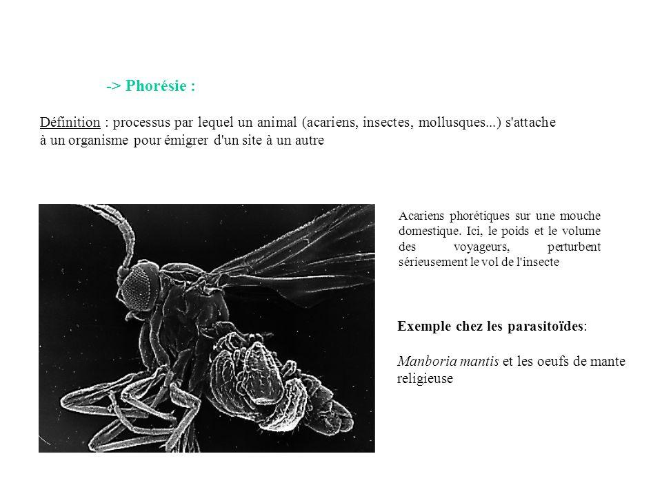 -> Phorésie : Définition : processus par lequel un animal (acariens, insectes, mollusques...) s'attache à un organisme pour émigrer d'un site à un aut