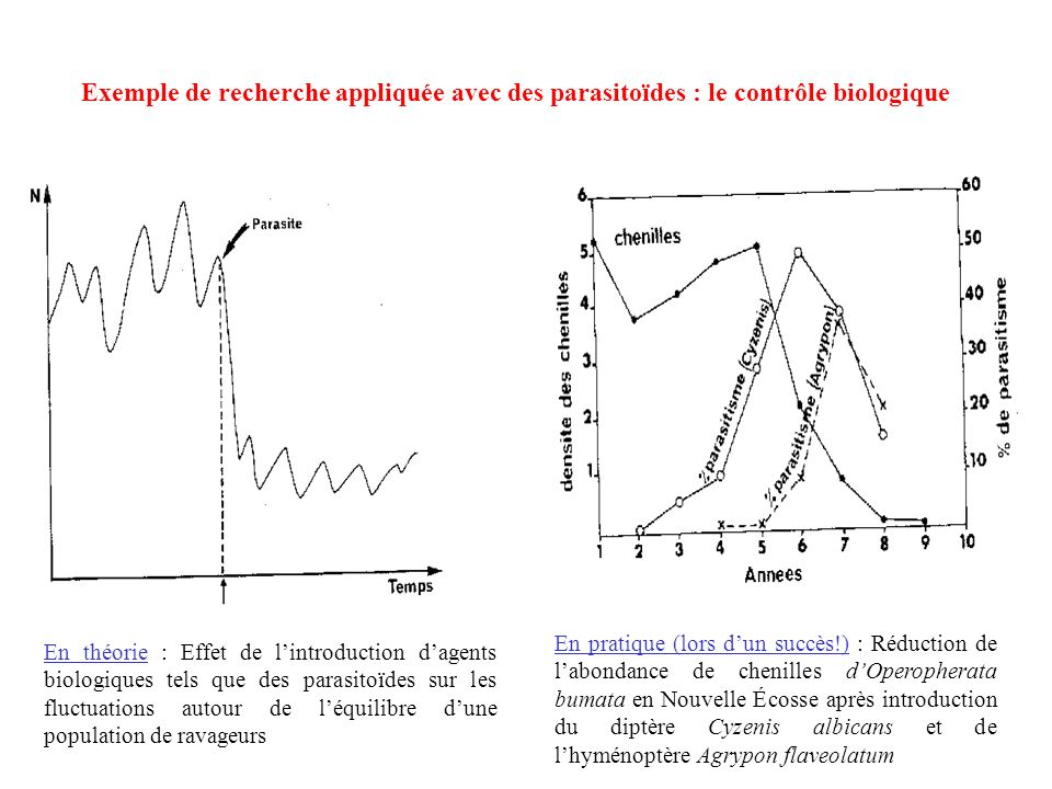 En pratique (lors dun succès!) : Réduction de labondance de chenilles dOperopherata bumata en Nouvelle Écosse après introduction du diptère Cyzenis al