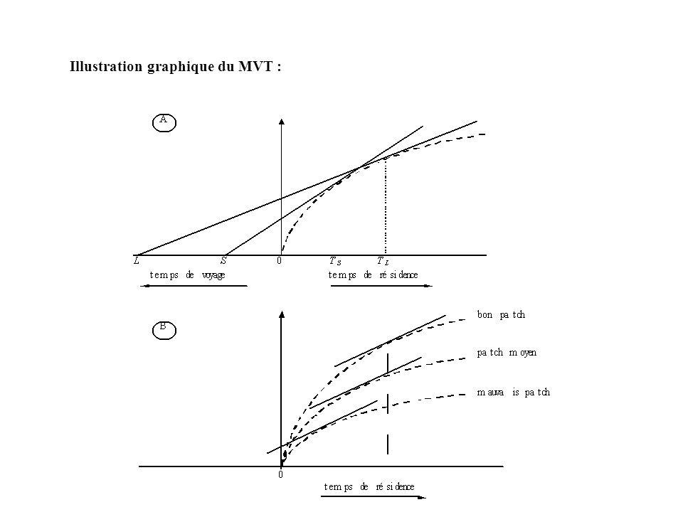Illustration graphique du MVT :