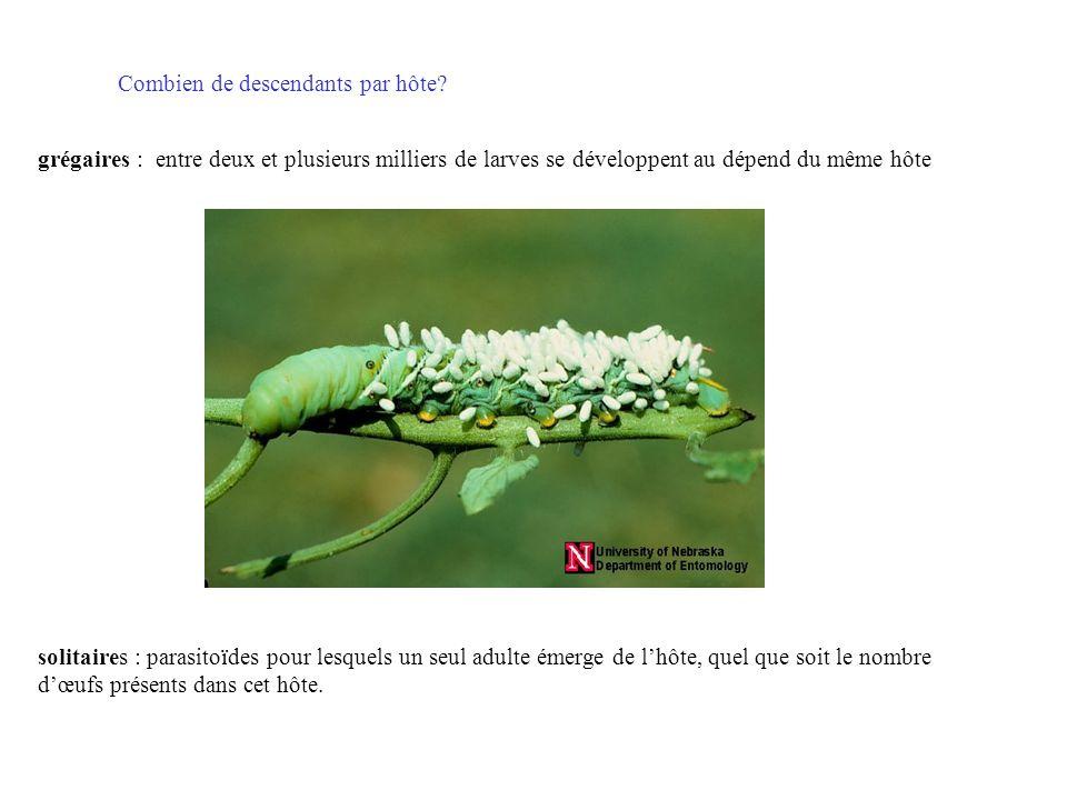 solitaires : parasitoïdes pour lesquels un seul adulte émerge de lhôte, quel que soit le nombre dœufs présents dans cet hôte. grégaires : entre deux e