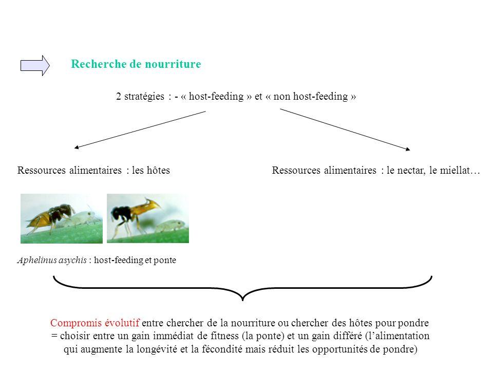 Recherche de nourriture 2 stratégies : - « host-feeding » et « non host-feeding » Ressources alimentaires : les hôtesRessources alimentaires : le nect