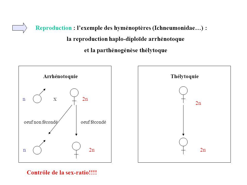 Reproduction : lexemple des hyménoptères (Ichneumonidae…) : la reproduction haplo-diploïde arrhénotoque et la parthénogénèse thélytoque ArrhénotoquieT