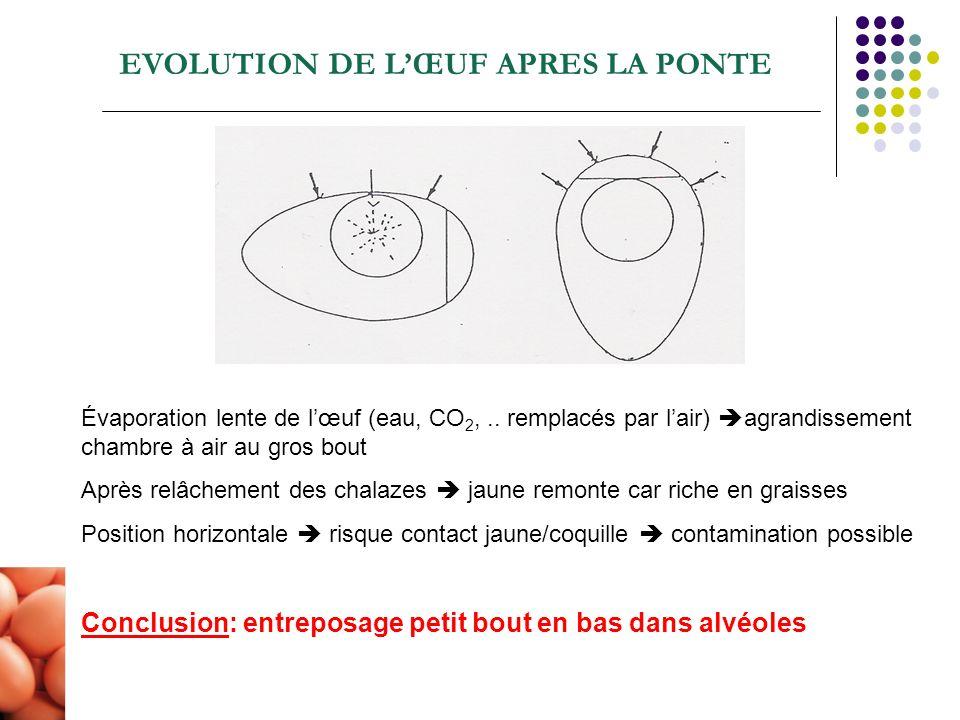 EVOLUTION DE LŒUF APRES LA PONTE Évaporation lente de lœuf (eau, CO 2,.. remplacés par lair) agrandissement chambre à air au gros bout Après relâcheme